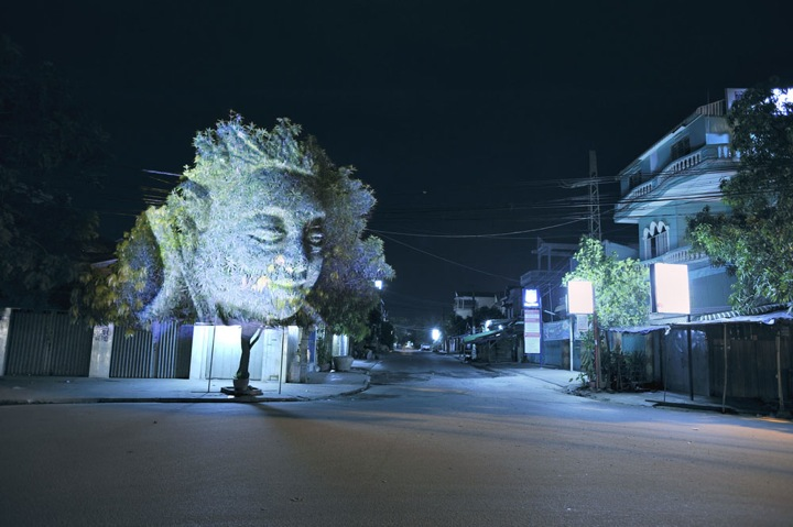 Cambodian-Trees5